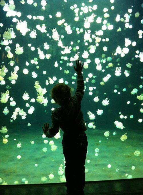 17 best jellyfish tanks images on pinterest jellyfish for Tap tap fish light jellyfish