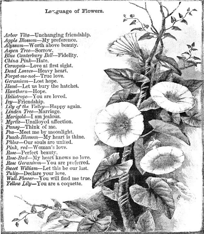 8 best Victorian Language of Flowers images on Pinterest