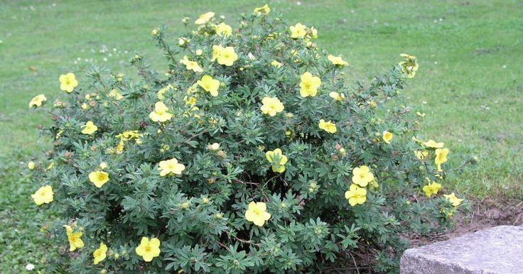 88 best Pflanzen out images on Pinterest Plants, Balcony and Boden - gartenpflanzen winterhart immergrun