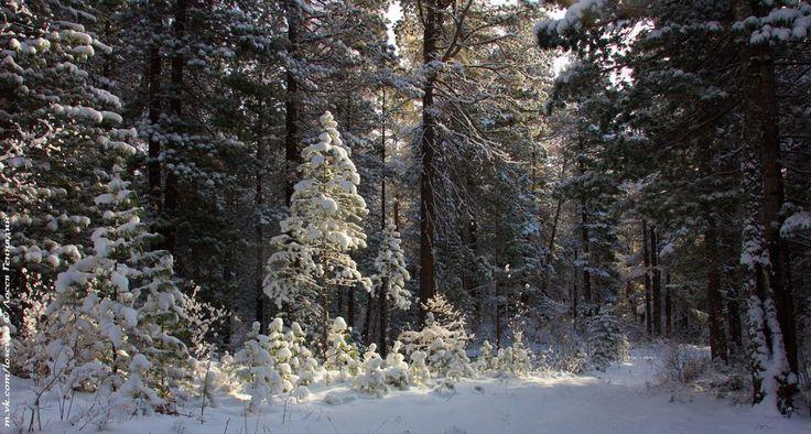 Сказки зимнего леса – 35 фотографий