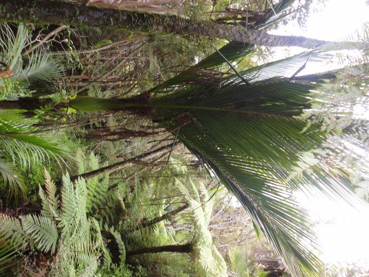 Einheimische neuseeländische Pflanzen, die auch essbar sind - Teil 1