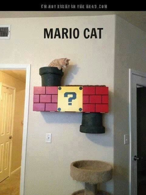 I JUST told my fiancé we should build a cat system on the wall and ceiling and to fit our gaming themed living room, we should make the cat climber Mario themed!!! Then I find this!!! WIN!!