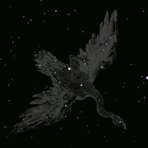 Cygnus Constellation — Cygnus (the swan) is a northern constellation. It was one of Ptolemy's 48 constellations, and is also one of the 88 modern constellations.