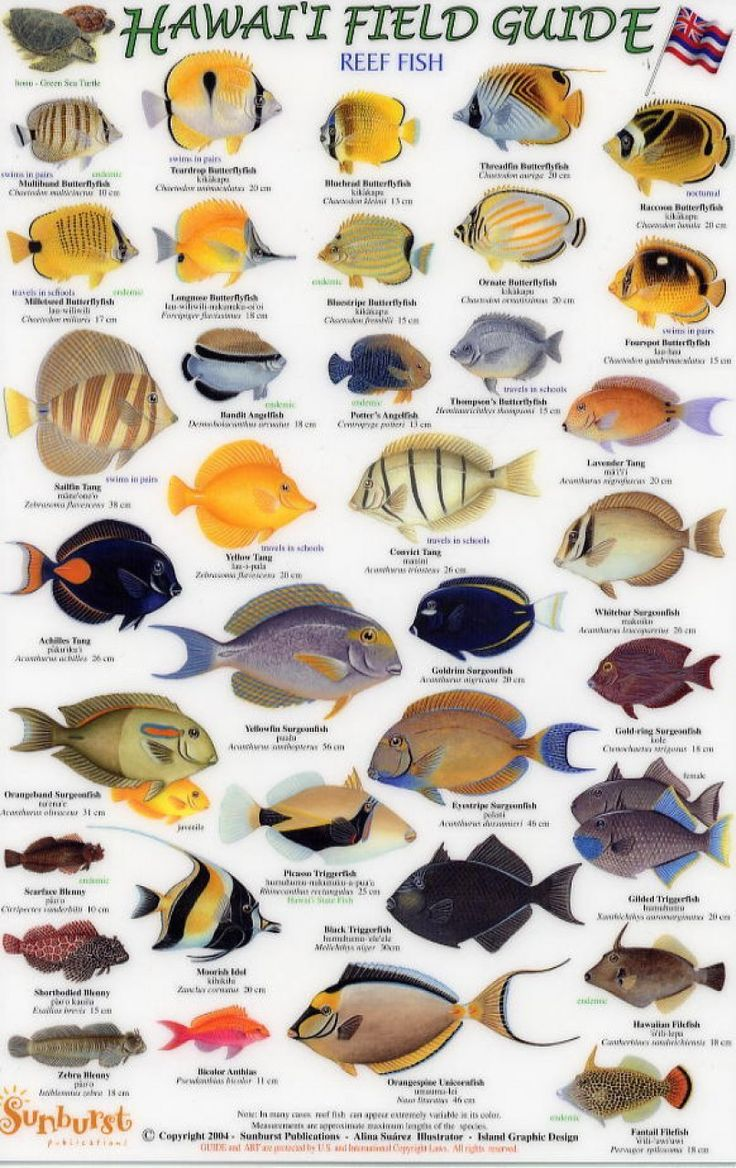 Hawaiian fish guide hawaii vacation in oahu pinterest for Hawaiian reef fish