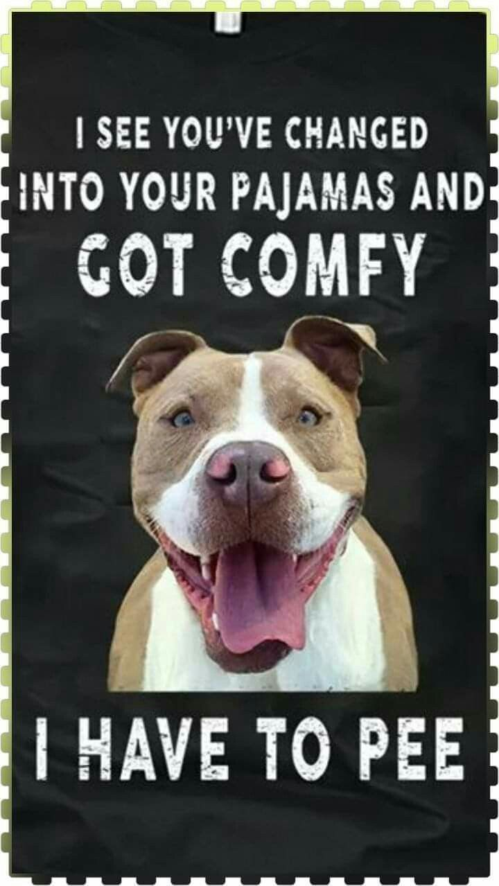 Is This A Bully Breed Thing Mine Does This Especially When It S Cold Out And I Ve Just Got Under The Covers In 2020 Pitbull Awareness Month Funny Dogs Pitbull Lover