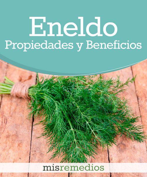 #Eneldo - Propiedades y Beneficios #PlantasMedicinales