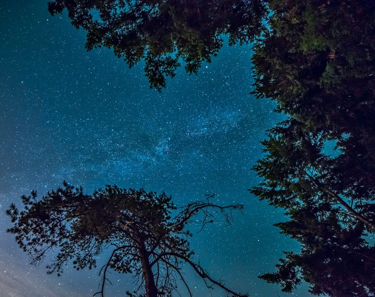Milky Way Framed Trees