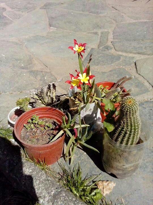 Las flores mas lindas son las que mi Hadita Valentina me regala