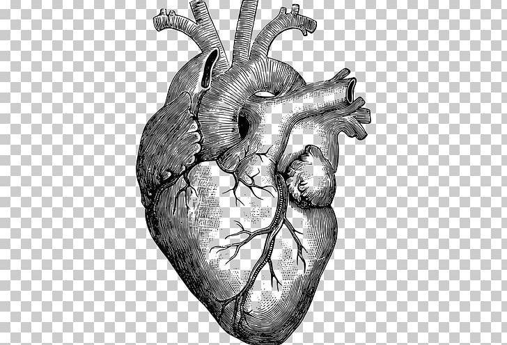 Human Heart Drawing Png Human Heart Drawing Heart Anatomy Drawing Anatomical Heart Drawing
