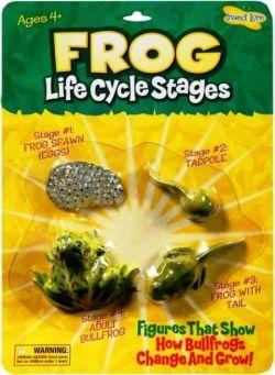 Frog Life Cycle Stage Figures