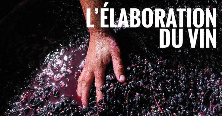 Avant de devenir un joli liquide rouge, blanc, effervescent ou rosé, le vin est un raisin !