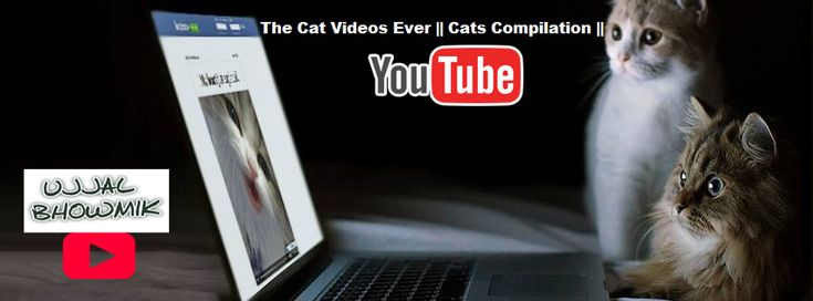 The Cat Videos Ever || Cats Compilation || - YouTube Playlist. YouTube Videos Playlist. My Feverite Videos Playlist.