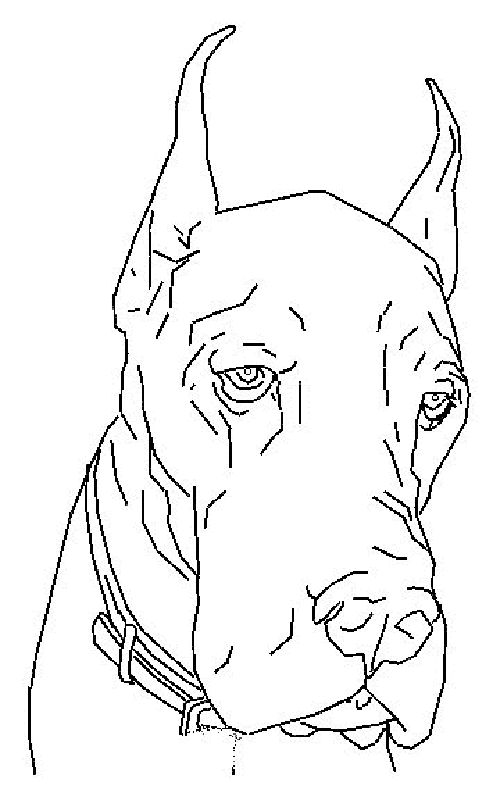 Great dane dog colouring pages for kids pinterest for Great dane coloring pages