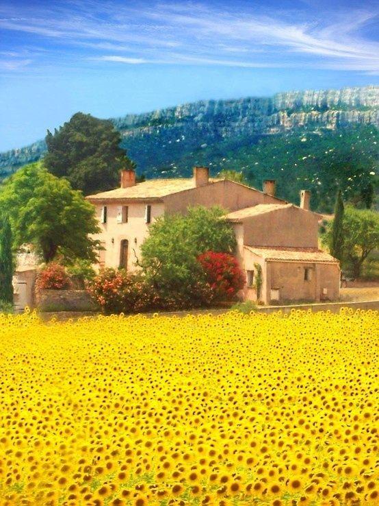 Sunflower field...St.Maxime, Provence-Alpes-Cote d'Azur Region, France.....come il quadretto che mi regalò papà :-)