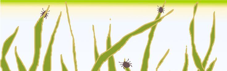 Association LYME SANS FRONTIÈRES :  aide et explications en cas de suspicion de Maladie de Lyme, due à une piqûre de tique infectée. Lien précieux fait par des personnes directement concernées.