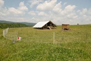 Why is Polyface Farm so successful? How Joel Salatin creates self-generating, profitable enterprises