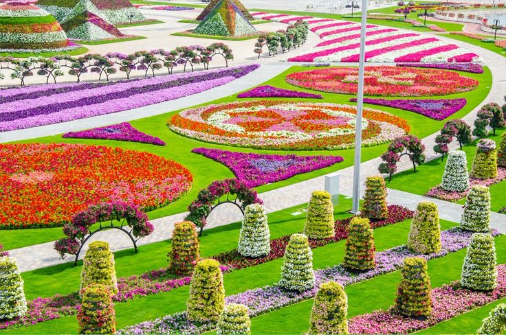 1000 images about dubai miracle garden on pinterest for Garden design dubai