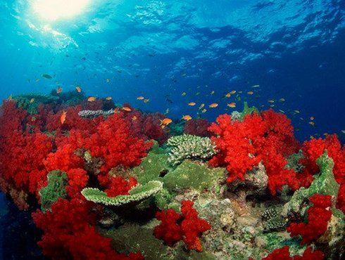 Dans la mer d'Andaman, en Thaïlande, les îles Surin sont connues pour la variété de leurs fonds marins et leurs colonies de coraux restées pratiquement intactes.