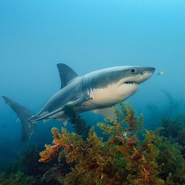 255 Best Sharks Images On Pinterest