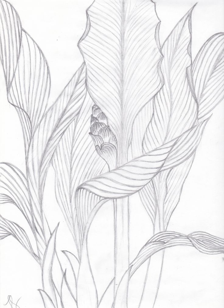 Contour Line Drawing Of A Plant : Visualization basics tropical leaves contour drawing from