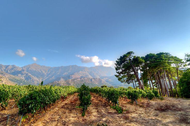 31 best Corsica, Sicily, Amalfi Coast images on Pinterest Amalfi - chambre d agriculture de corse du sud