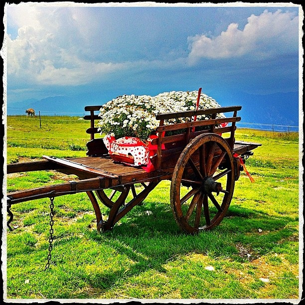 Wagon with flowers - Montebaldo - @gaetanocosta- #webstagram