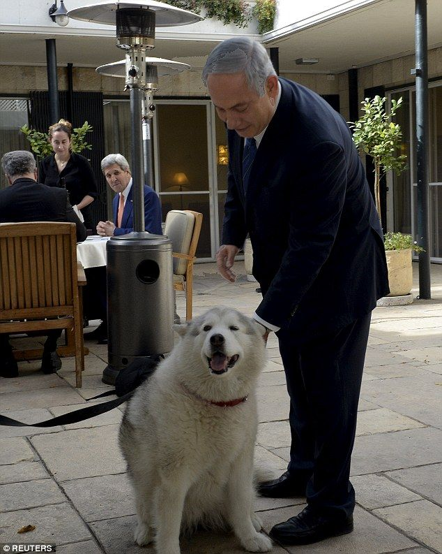 Benjamin Netanyahu stands next to his recently adopted dog Kaiya during his meeting with U.S. Secretary of State John Kerry (behind) in Jerusalem in November. ToIsraeli Prime Minister's horror, Kaiya bit two of his guests at a candle-lighting ceremony tomark Hannukah at his Jerusalem residence this week