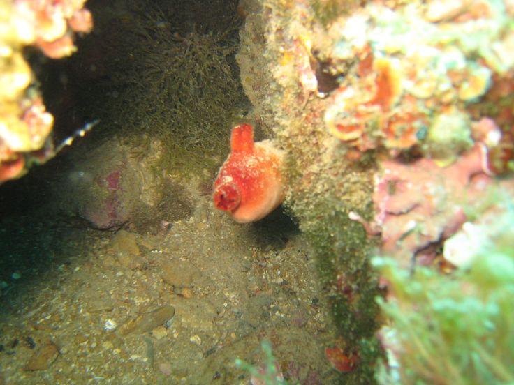 el eslabon perdido entre los animales del mar y los terrestres
