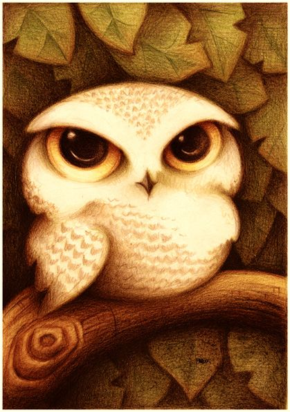 Little owl.Owls Tat, Art Drawing, Baby Owls, Snowy Owls, A Tattoo, Owls Art, Big Eye, Animal, Owls Illustration