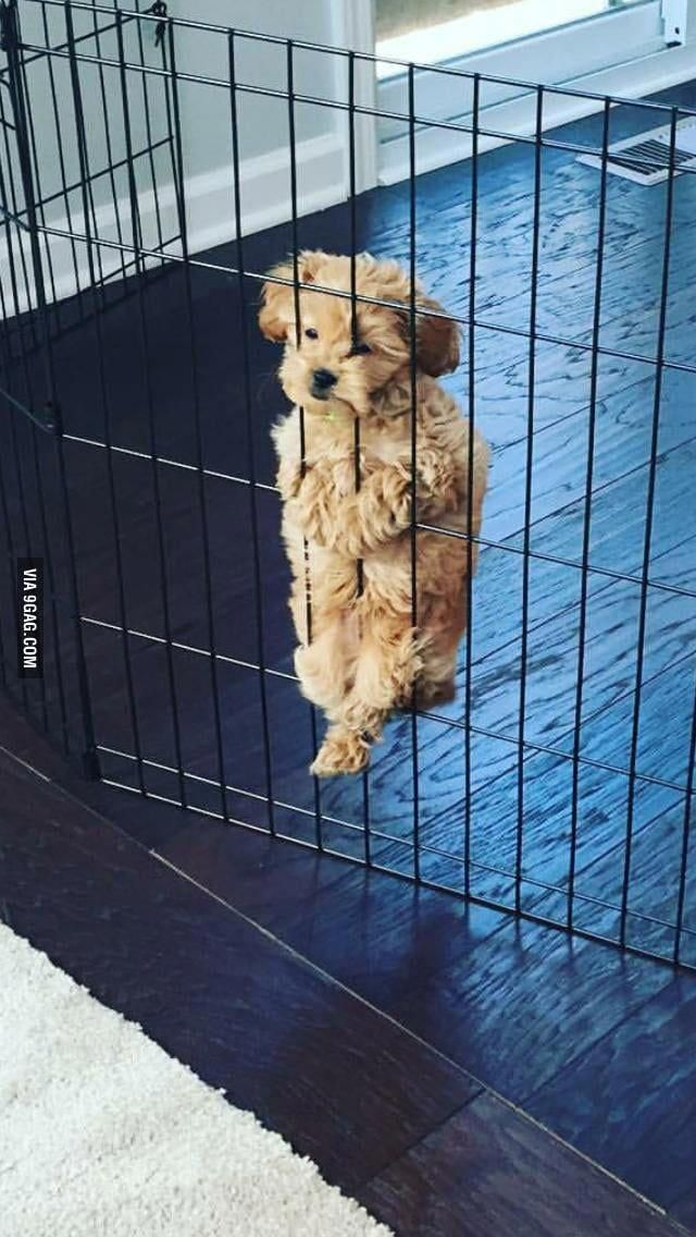 This Little Inmate Keeps Trying To Escape Dogs Cute Dogs Breeds Cute Animal Pictures Cute Dogs And Puppies