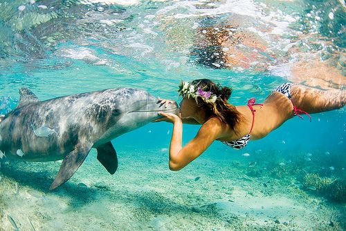 swimming with dolphins :)
