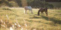 Southern Cross Horse Treks Australia - Kerewong Horse Holiday Farm NSW