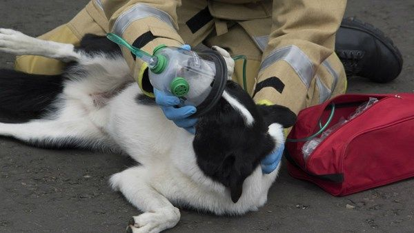 Tiny oxygen masks to help pets are to be carried by fire crews in the UK