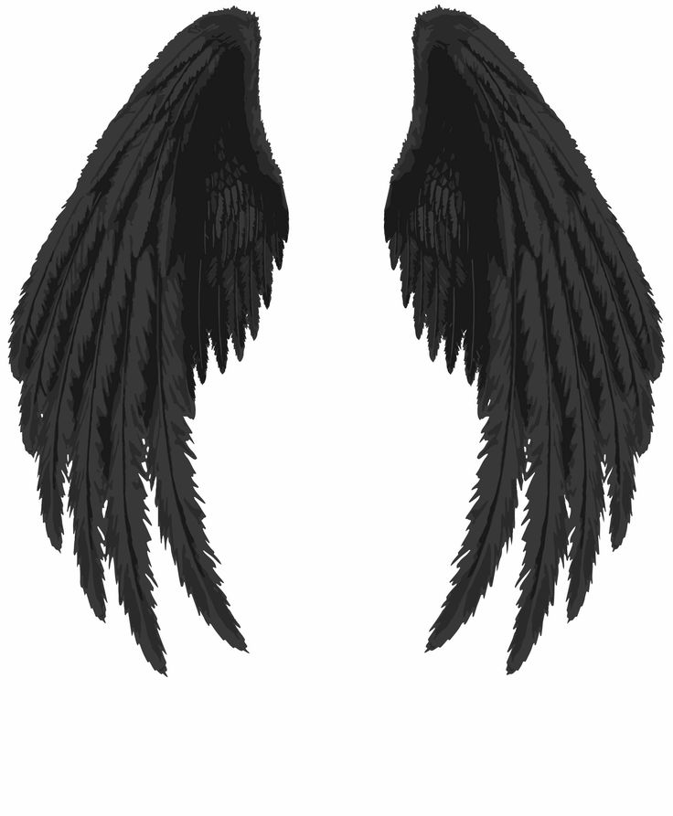 raven wings, raven, wings, raven wings drawing