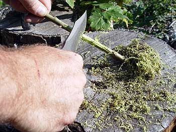 How to Make Aspirin From Bark Perhaps the greatest medicine ever invented by man is aspirin. Here you will learn how to make your own aspirin in the wilderness. Everything you need to survive is provided by nature, often in quantities so vast they may appear inexhaustible. But unless you are skilled in wilderness survival you may not know how to identify and put to use the bounty nature provides. You m...: