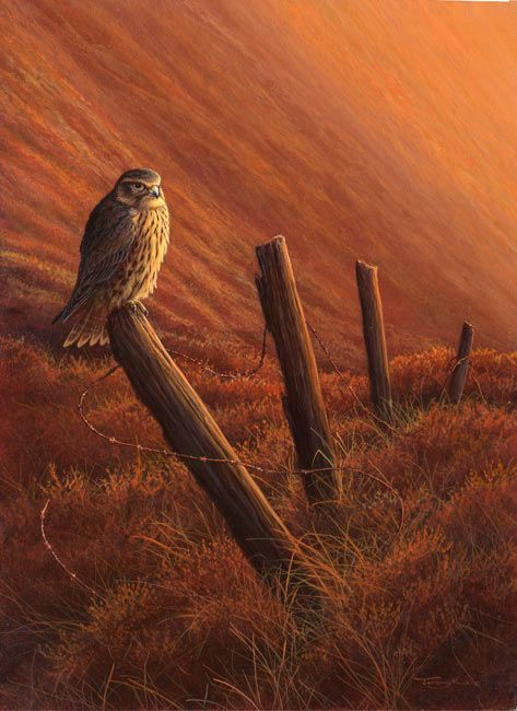 merlin evening light by Jeremy Paul