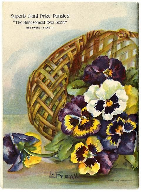"Oh my! The overflowing basket of pansies seen on the front cover seems to have fallen over on the back cover of Emma V. White's 1913 catalog. Emma V. White called herself the ""North Star Seedswoman"" and had her first mailing in 1896. She produced catalogs with colorful, hand painted covers aimed at woman customers."
