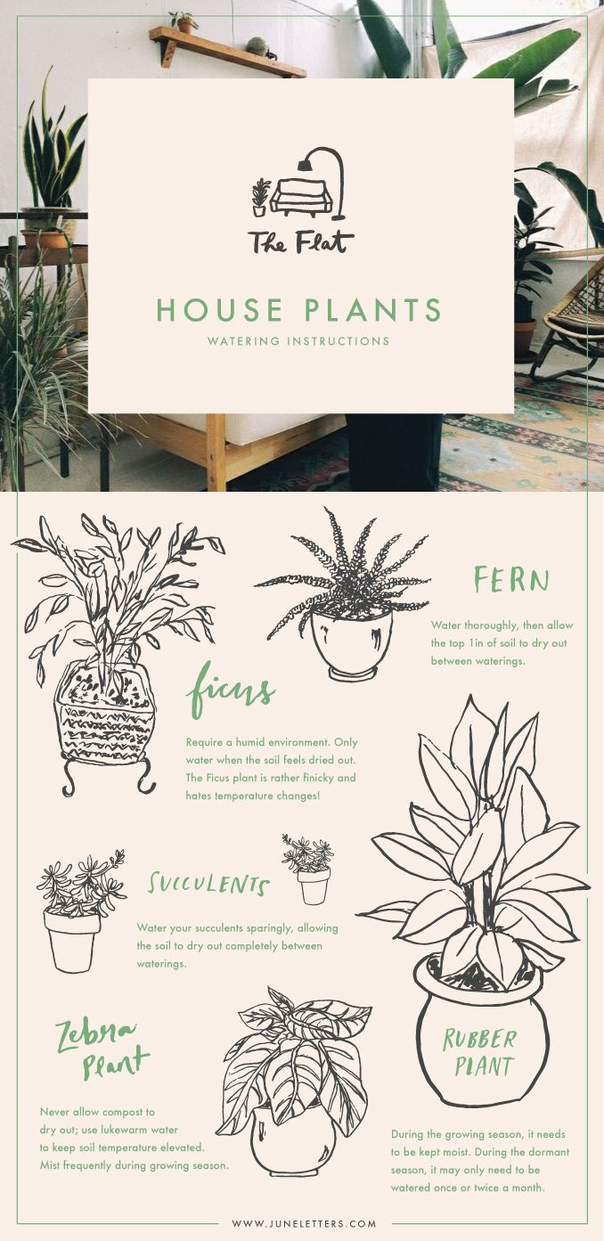 Illustrated guide to watering house plants /
