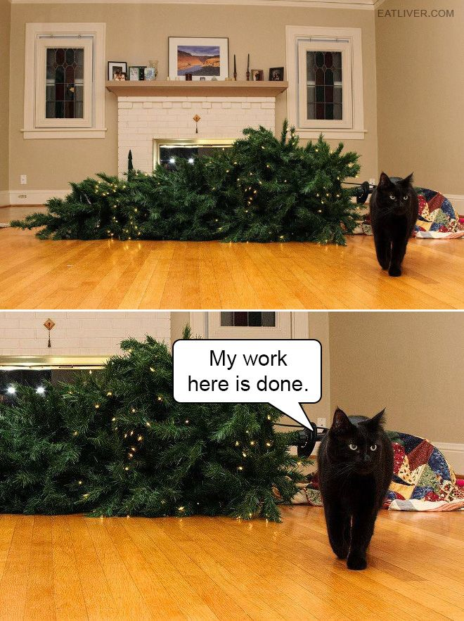 My Work Here Is Done Cat Christmas Tree Christmas Cats Pets