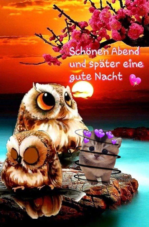 Gute Nacht Schlaf Gut Spruche Schones Bilder Gb Bilder Whatsapp Bilder Gb Pics Facebook Bilder Gute Nacht Schlaf Gut Spruche Gute Nacht Bilder