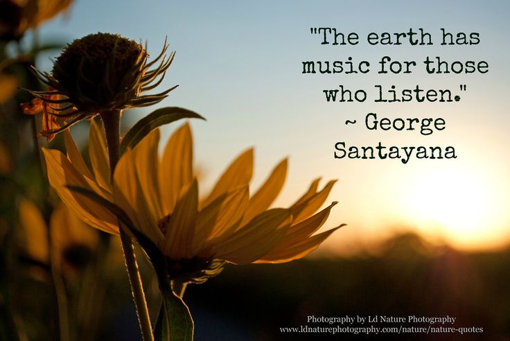 """The earth has music for those who listen."" -George Santayana #photography #nature #quote #georgesantayanaWww Ldnaturephotography Com, Nature Quotes, Ld Nature, Photography Nature, Quotes Georgesantayana, Nature Photography, Beautiful Photography, Awesome Nature, Photography Quotes"