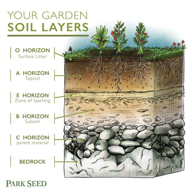 Soil Layers Soil Texture Plants Worksheets