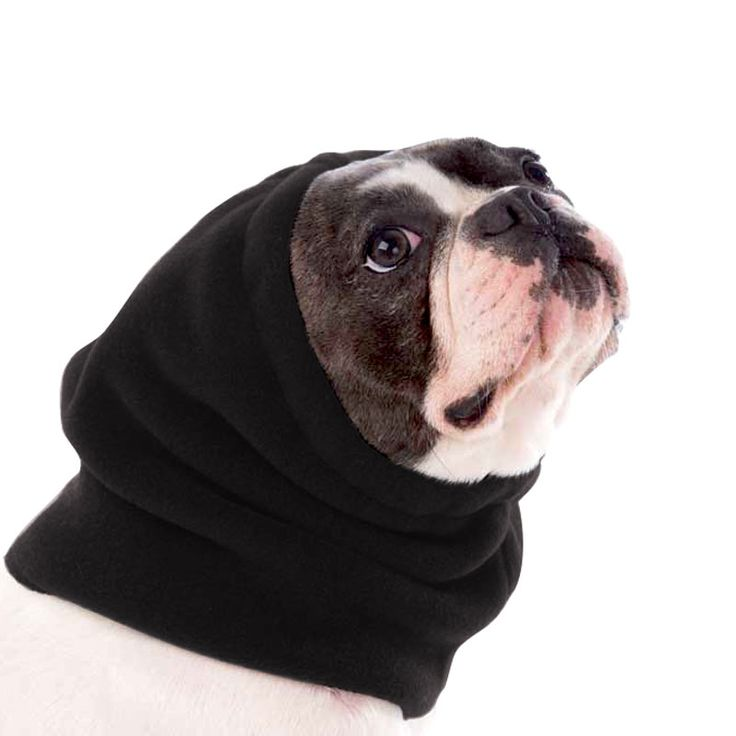 Black French Bulldog Dog Hood, great for warmth and laying with our dog rain coat. High performance material. Made in the USA.
