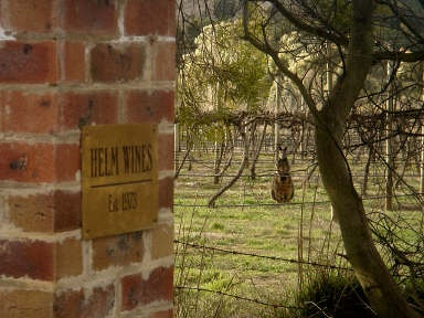 Wallaby in the vineyard - Helm Wines, Murrumbateman, Australia