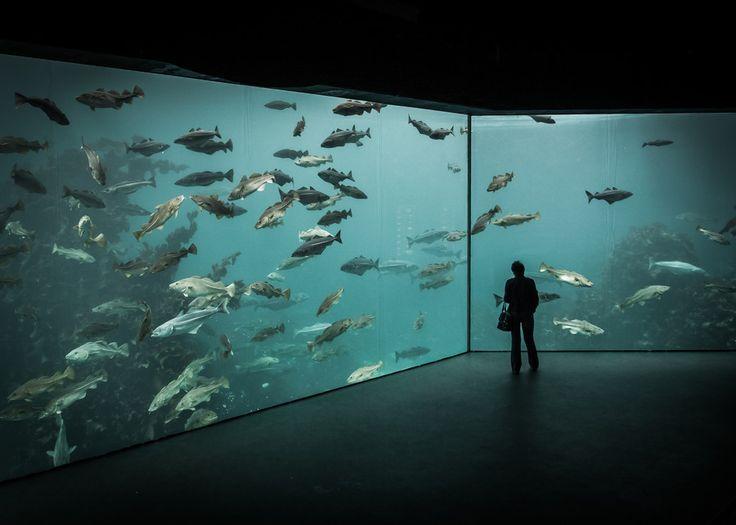 17 Best Images About Aquariums Public Private On