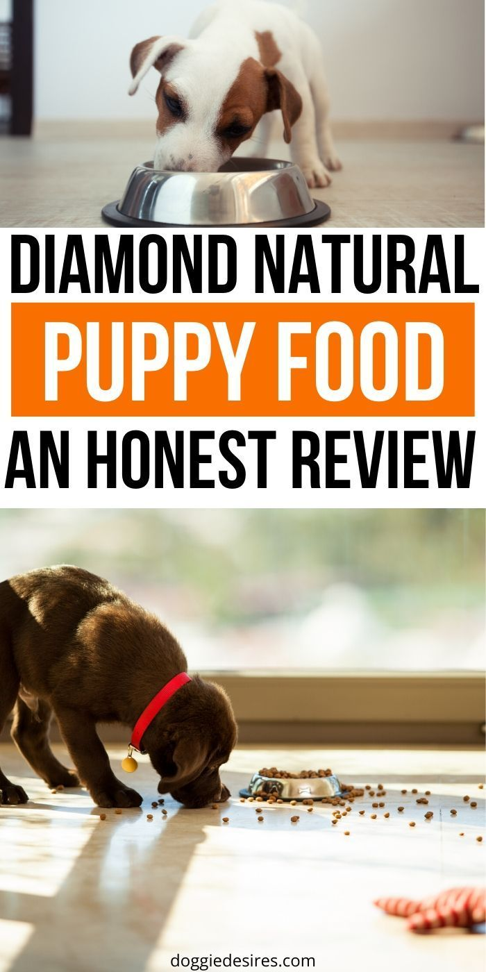 Diamond Naturals Puppy Food Review The Right Choice For Your Canine Companion Doggie Desires Natural Puppy Puppies Puppy Food