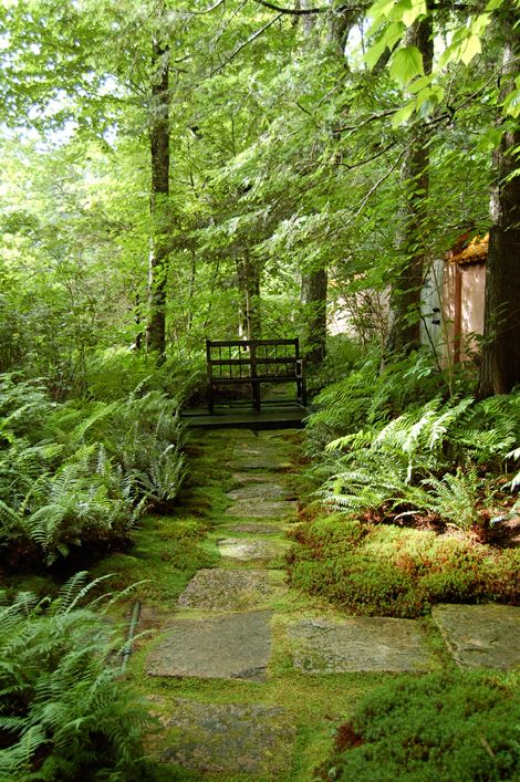 Path to Garden Bench - A bench placed in the shade can offer a cool and comfortable place from which to view the garden or just sit and read a book. -