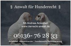 Anwalt für Hunderecht | Hunderechtsanwalt -  bundesweite Rechtsberatung - 06136 762833 http://www.der-tieranwalt.de http://www.tierrecht-anwalt.de  #Hundebiss #Hundebeisserei #Tierhalterhaftung #EinstufunggefährlicherHund #Listenhunde #Hundesteuer ...Recht rund um den Hund , #Hundehaltung