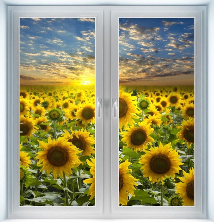Majestic Wall Art - Field of Flowering Sunflowers Instant Window, $44.00 (http://www.majesticwallart.com/instant-windows/field-of-flowering-sunflowers-instant-window)