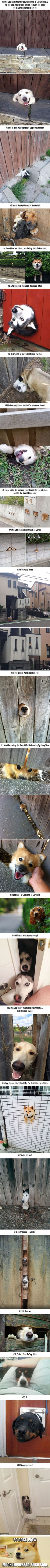 Dog looking up out of fence for attention. Doggies.. Funny looking dogs…